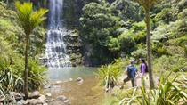 Waitakere Ranges Guided Walk from Auckland, Auckland, Hiking & Camping