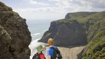 Waitakere Ranges Guided Walk from Auckland