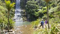 Waitakere Ranges Guided Walk vanuit Auckland, Auckland, Trektochten en kamperen