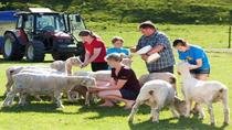 Agrodome Sheep Show en Farm Tour, Rotorua, Day Trips