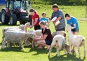 Agrodome Sheep Show und Farm Tour, Rotorua, Day Trips