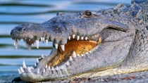 Miami Everglades Airboat-Abenteuer mit Transport, Everglades National Park, Airboat Tours