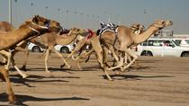 Shahania Camel Race Track Tour, Doha, Nature & Wildlife