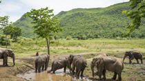 Elephant World Kanchanaburi with private transfer from Bangkok, Bangkok, Private Transfers