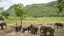 Elephant World Kanchanaburi with private transfer from Bangkok, Bangkok, Private Transfers