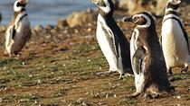 Caminhada com pinguins na Ilha Martillo, Ushuaia, Half-day Tours