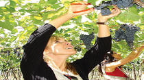 Deluxe Mendoza Half-Day Wine Tasting Tour, Mendoza, Wine Tasting & Winery Tours