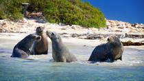 Penguin Island Tour with Dolphin and Sea Lion Cruise, Perth, Segway Tours