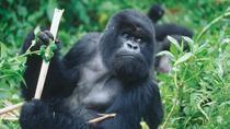 3-Day Rwanda Gorilla Safari from Kigali, Kigali, Safaris