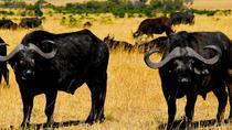 Kiboko Safari, Nairobi, Safaris