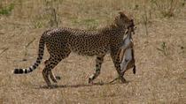 Maasai Mara Safaris, Nairobi, Safaris