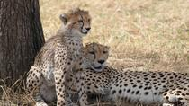 Serengeti Safari - Tanzania, Arusha, Safaris
