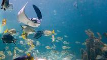 Aquarium Encounters Tour, Key Largo, Attraction Tickets