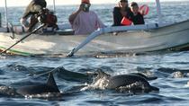 Bali Dolphin Tour at Lovina, Gitgit Waterfall and Ulundanu Beratan, Kuta, Nature & Wildlife