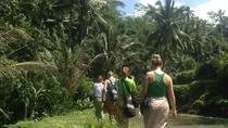 Rice Paddies Trekking Tours with Lunch, Ubud, Hiking & Camping