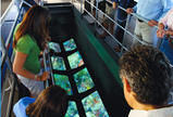 Key West: Ausflug mit dem Glasbodenboot mit Option für den Sonnenuntergang, Key West, Glass Bottom Boat Tours