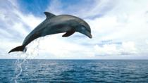 Key West Dolphin Watch and Snorkel Cruise, Key West, Glass Bottom Boat Tours