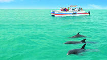 Key West Dolphin Watch and Snorkel Cruise, Key West, Snorkeling