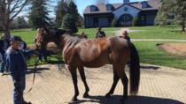 Bluegrass Horse Farm Tour, Lexington, Kid Friendly Tours & Activities