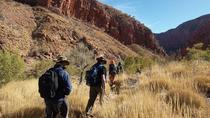 5-Day Larapinta Trail Walking Tour from Alice Springs, Alice Springs, Multi-day Tours