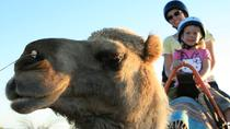 Uluru Camel Express, Sunrise or Sunset Tours, Ayers Rock