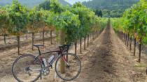 Dry Creek Valley Bike and Wine Tour from Healdsburg, Healdsburg, Bike & Mountain Bike Tours