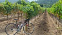 Dry Creek Valley Bike and Wine Tour from Healdsburg with Lunch, Healdsburg, Bike & Mountain Bike ...