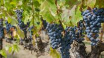 Dry Creek Valley Bike and Wine Tour from Healdsburg with Lunch