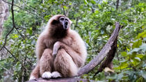 Monkeyland Guided Tour in Plettenberg Bay, Garden Route, Nature & Wildlife
