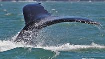 Gulf of the Farallones Whale Watching Excursion, San Francisco, Dolphin & Whale Watching