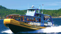Hvalsafari fra Vancouver, Vancouver, Dolphin & Whale Watching