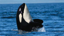 Whale-Watching Tour from Vancouver