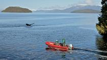 Ketchikan Shore Excursion: Zodiac Boat Wilderness Adventure, ケチカン