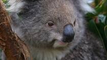Melbourne Shore Excursion: Healesville Sanctuary and Puffing Billy Steam Train, Melbourne, ...