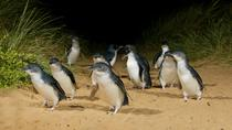 Phillip Island Wildtiere-Tour und Pinguinparade am Nachmittag ab Melbourne, Melbourne, Day Trips
