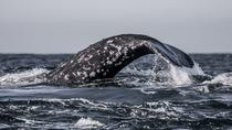 3-Hour Monterey Bay Winter Whale-Watching Tour in California, Monterey & Carmel, Dolphin & ...