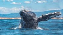Half-Day Whale Watching Tour From Monterey