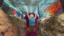 3-Attraction Ticket: The Coca-Cola Orlando Eye, Madame Tussauds Orlando and SEA LIFE Aquarium , ...