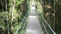 Roatan Shore Excursion: Hanging Bridges Eco Tour and Beach Break, Roatan