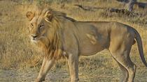 Hluhluwe Imfolozi Big 5 Reserve day Safari from Durban, Durban, Cultural Tours