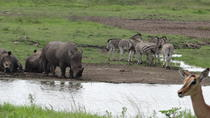 Mini Safari and Zulu Cultural experience - Day Tour, Durban, Cultural Tours