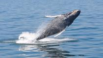 Whale Watch from Plymouth, Cape Cod, Dolphin & Whale Watching