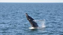 Whale Watch from Provincetown, Cape Cod, Dolphin & Whale Watching