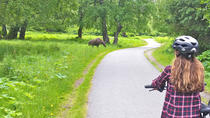 Tony Knowles Coastal Trail Scenic Bike Tour, Anchorage, Bike & Mountain Bike Tours