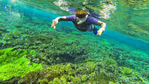 Snorkeling in Crystal Clear Water, Tonga, Day Trips