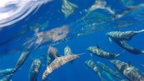 Dolphin Quest, Mazatlan, 4WD, ATV & Off-Road Tours
