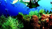 Reef Experience, Cancun, Other Water Sports