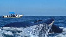 Whale Quest Expedition, Mazatlan, 4WD, ATV & Off-Road Tours