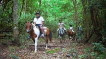 Full-day Horse Riding and ATV Tour from Cairns, Cairns & the Tropical North, Horseback Riding