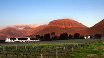 Eco-Wine Tour, Stellenbosch, Wine Tasting & Winery Tours